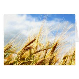 Em um círculo da colheita no sol cartão
