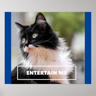 Entertain me - imagem engraçada do gato da comédia poster