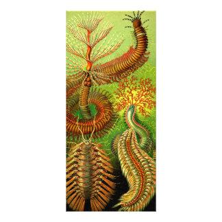 Ernst Haeckel Chaetopoda 10.16 X 22.86cm Panfleto