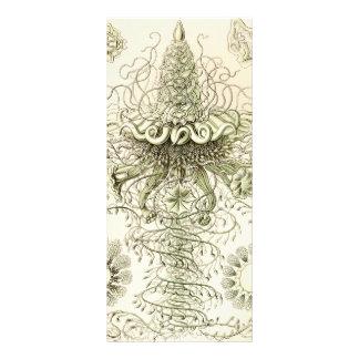 Ernst Haeckel Siphonophorae 10.16 X 22.86cm Panfleto