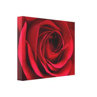 Escarlate das canvas da rosa vermelha