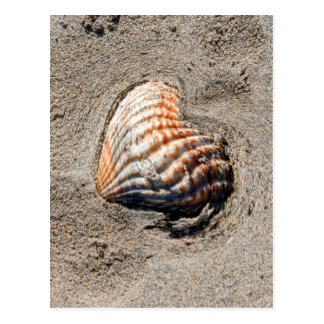 escudos do coração na praia cartão postal