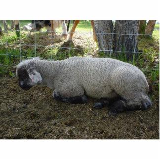 Escultura dos carneiros escultura fotos