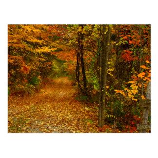 Esplendor do outono em Nova Inglaterra Cartão Postal
