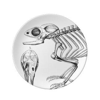 Esqueleto do lagarto do vintage pratos de porcelana