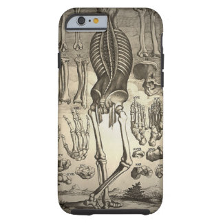Esqueleto humano Ca 1741 Capa Tough Para iPhone 6