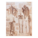 Esqueletos humanos Leonardo da Vinci dos desenhos  Cartao Postal