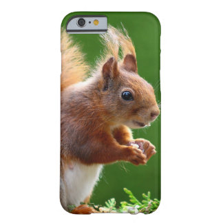 Esquilo bonito no jardim capa barely there para iPhone 6