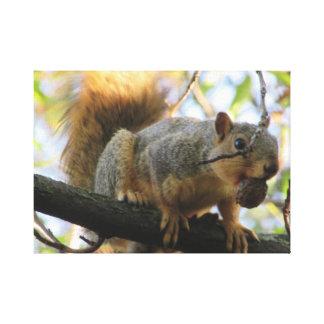 Esquilo bonito que guardara uma arte das canvas da