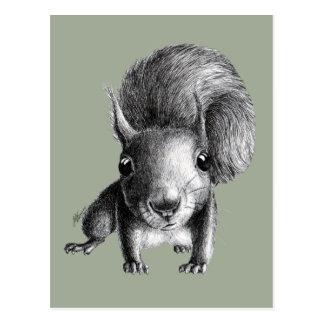 Esquilo curioso bonito cartão postal