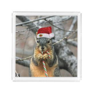Esquilo do Natal
