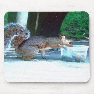 esquilo no Central Park, mousepad