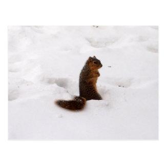 esquilo no inverno cartão postal