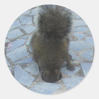 Esquilo no Largo chave, Florida Adesivo