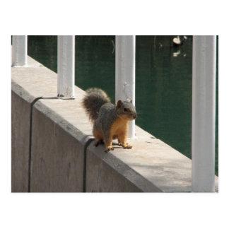 esquilo que toma uma caminhada cartões postais