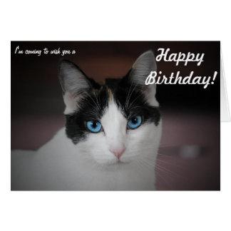 Este gato whishes um feliz aniversario! cartão comemorativo