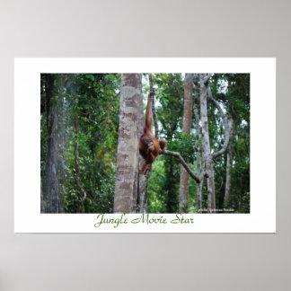 Estrela de cinema de Aimal da selva de Bornéu Pôster