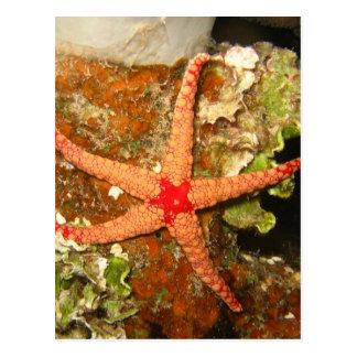 Estrela do mar alaranjada cartão postal