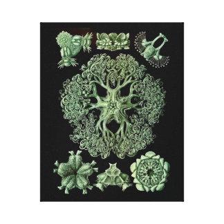 Estrela do mar com braços delicados impressão em tela