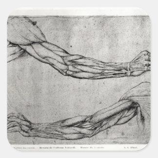 Estudo dos braços adesivos quadrados