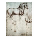 Estudo dos cavalos - Leonardo da Vinci Cartão Postal