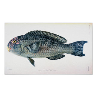 Estudo histórico dos peixes poster