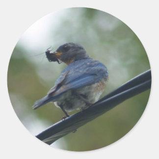"Etiqueta azul do pássaro ""a guloseima "" adesivo"