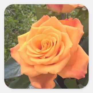 Etiqueta cor-de-rosa da foto da laranja bonita adesivo quadrado
