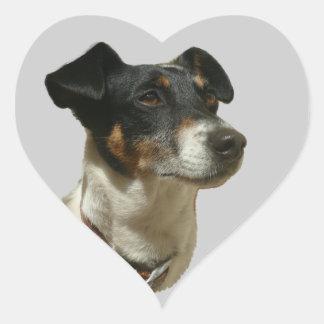Etiqueta do coração do cão de Jack Russell Adesivo Coração