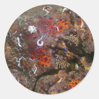 Etiqueta do rei caranguejo de Puget Sound Adesivo