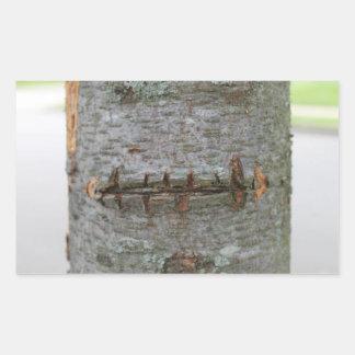 Etiqueta do tronco de árvore da cicatriz