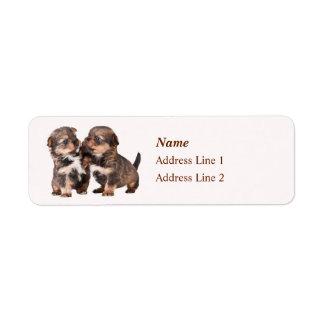 Etiqueta Filhotes de cachorro bonitos do yorkshire terrier