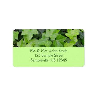 Etiqueta Impressão botânico da hera verde