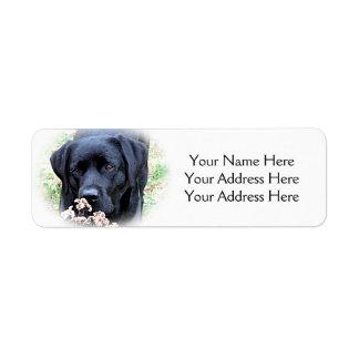 Etiqueta Labrador preto - tome o tempo