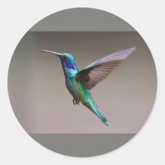 Etiqueta redonda clássica do pássaro do zumbido, adesivo