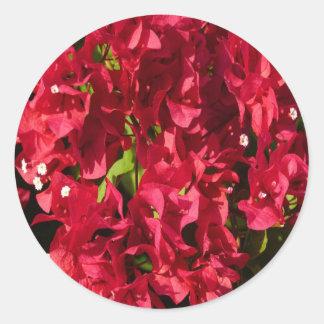 Etiqueta redonda dos Bougainvilleas vermelhos