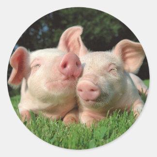 Etiqueta redonda dos porcos