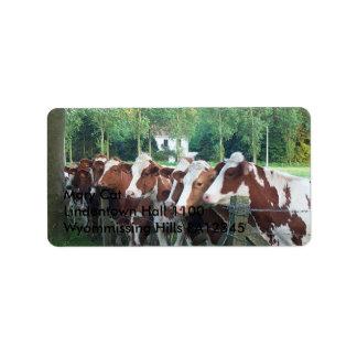 Etiqueta Vacas curiosas