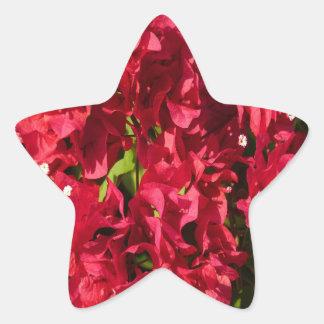 Etiqueta vermelha da estrela dos Bougainvilleas