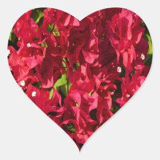 Etiqueta vermelha do coração dos Bougainvilleas
