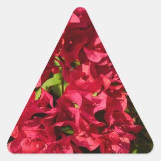 Etiqueta vermelha do triângulo dos Bougainvilleas
