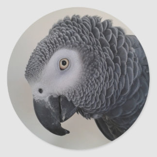 Etiquetas da cabeça do papagaio do cinza africano