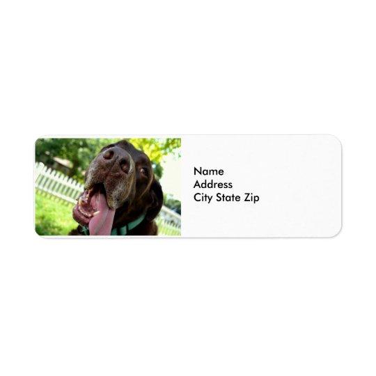 Etiquetas de endereço do remetente de labrador