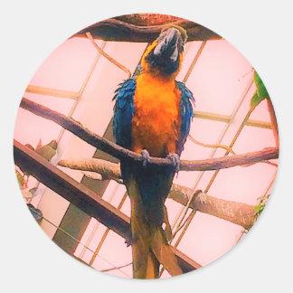 Etiquetas dos amantes do papagaio