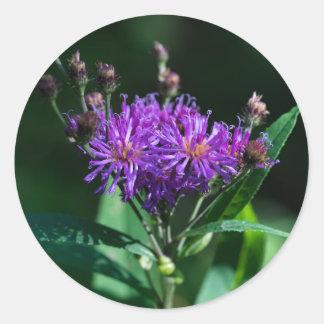 Etiquetas roxas do Wildflower do Ironweed
