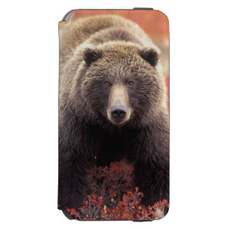 EUA, Alaska, Denali NP, urso de urso fêmea Capa Carteira Incipio Watson™ Para iPhone 6