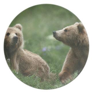 EUA, Alaska, ursos marrons do secundário-adulto do Pratos De Festas