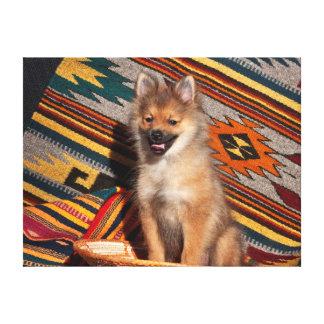 EUA, Califórnia. Assento de Pomeranian Impressão Em Tela Canvas