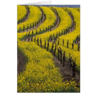 EUA, Califórnia, Napa Valley, Los Carneros Ava. Cartão