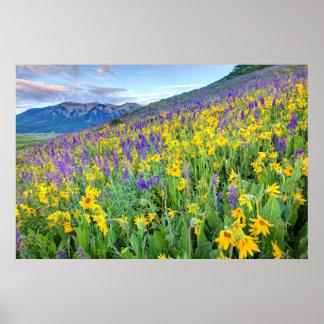 EUA, Colorado, montículo com crista. Paisagem Poster